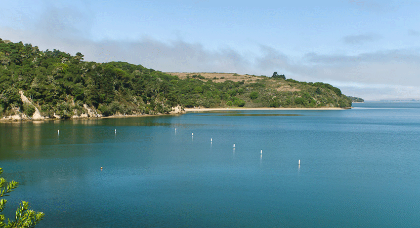 Tomales Bay Guided Boat Tour